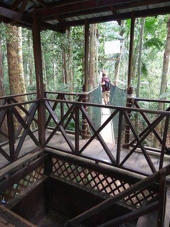 Taman Negara National Park, Malaysia: IMG_20170316_095915_large.jpg