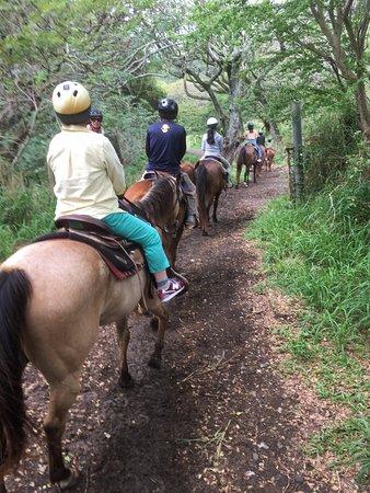 Kaneohe, Гавайи: 途中、くいしんぼうなお馬さんに道草くわれました(笑)