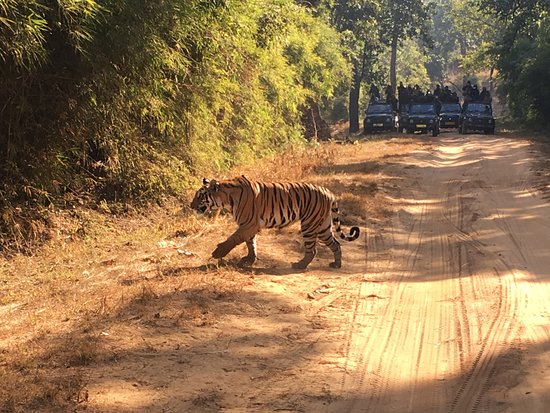 The most beautiful animal in the world bandhavgarh hill voltagebd Choice Image