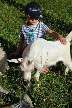 Saint-Bonnet en Champsaur, Frankreich: Chèvre - Ferme de la Mourière