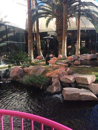Casino at the Flamingo Las Vegas: photo0.jpg