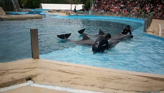 Mundo Marino : Delfines