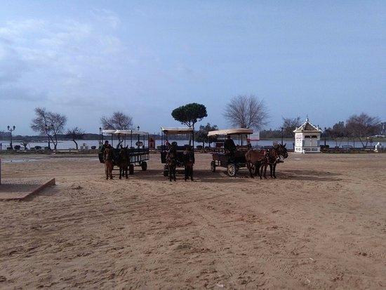Almonte, Hiszpania: Al fondo las marismas