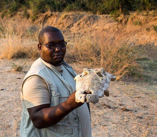 A small collection of our experiences at Zikomo Safari! 😎👍🏼