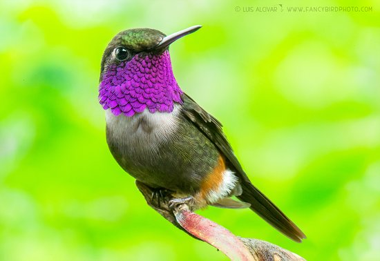 Tandayapa, เอกวาดอร์: Hummingbird Photography Paradise!
