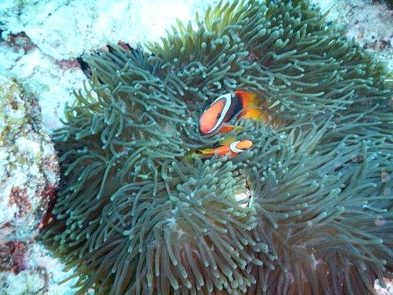 Liberte Diving Service Naha
