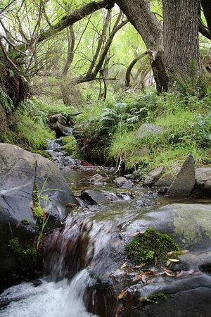 Fairlie, New Zealand: stream next to Devil's Ceek Hut