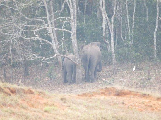 KTDC Lake Palace Thekkady: Elephants.