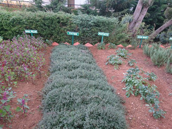 Ooty - Elk Hill, A Sterling Holidays Resort: In-house Nursery