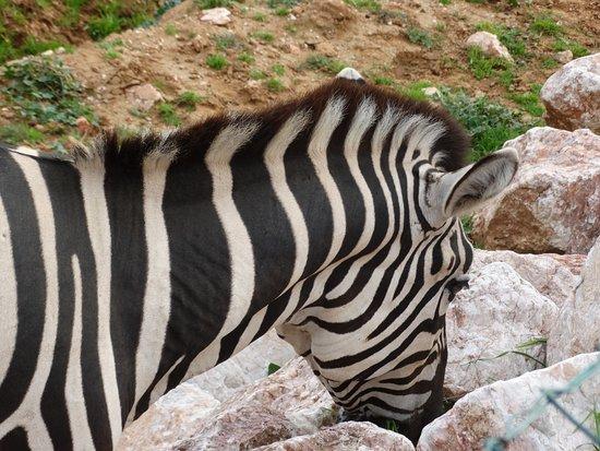 Спата, Греция: animals