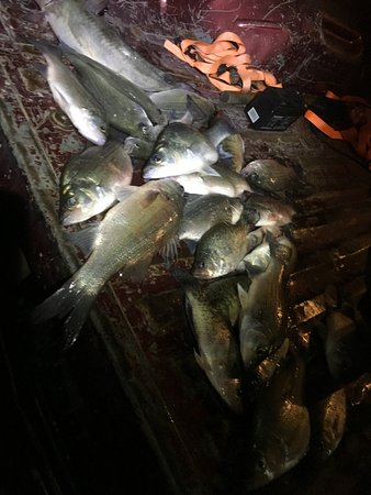Kopperl, TX : 3 hours of Fishing