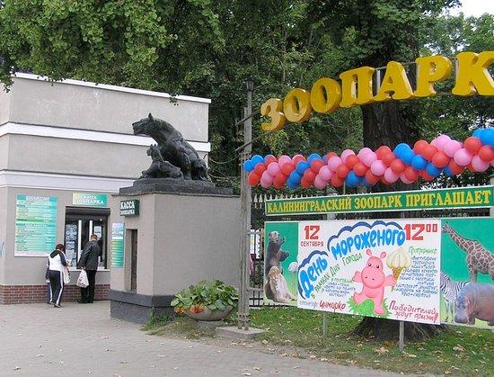 Калининградский зоопарк: День мороженного.