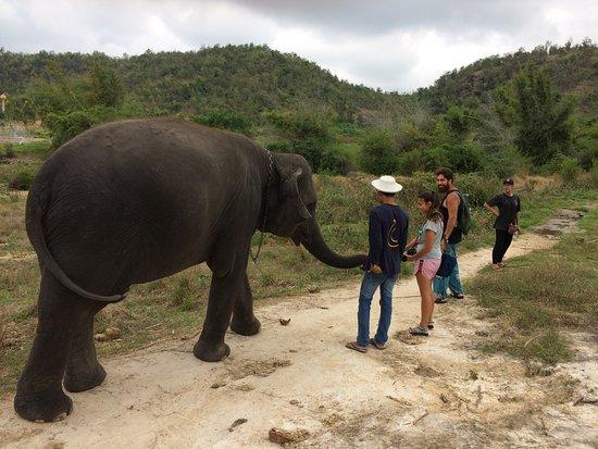 Hutsadin Elephant Foundation: Walking with an elephant