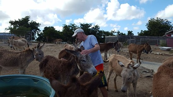 Saint Paul Parish, Antigua: Loving creatures!