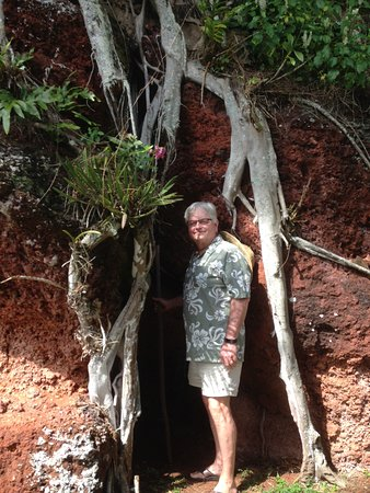 Kalaheo, Hawái: One shrine was covered up over the years by fast growing tree