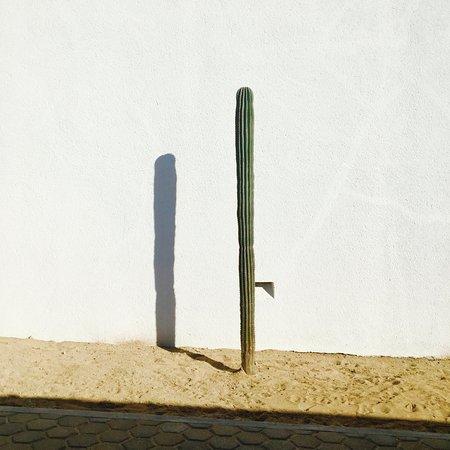 La Ventana, México: Jardines deserticos