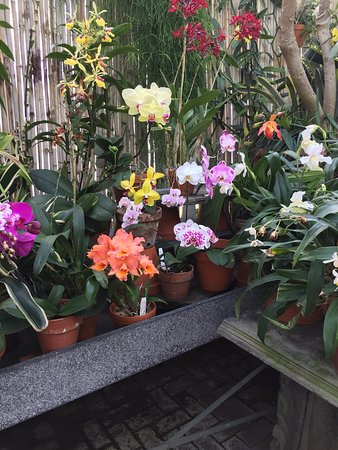 Biltmore Gardens Photo