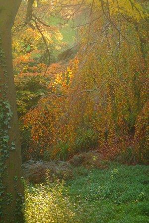 Newport, UK: Autumn Willow
