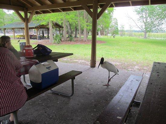 Lakeland, FL: Keep food out of reach