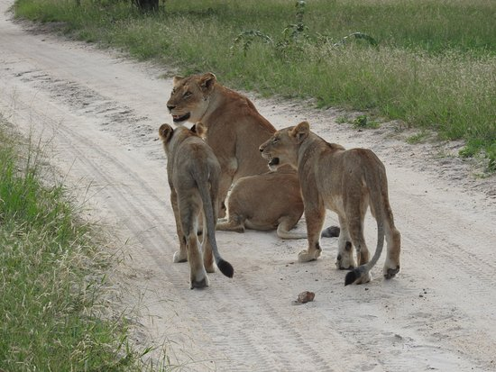 Timbavati Private Nature Reserve, South Africa: Lions