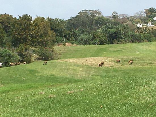 Apes Hill Golf Club : photo6.jpg