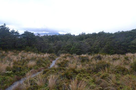 Вакапапа-Виллидж, Новая Зеландия: Silica Rapids
