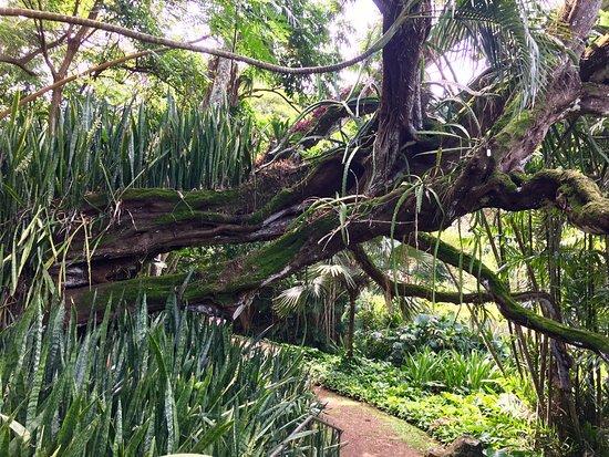 阿勒頓花園照片