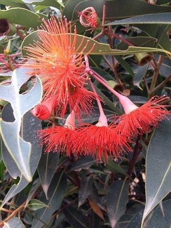 Healesville, Australien: photo0.jpg