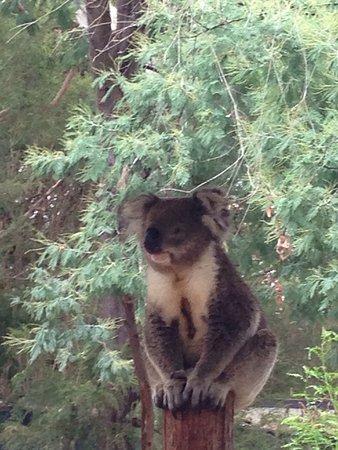 Healesville, Australien: photo1.jpg