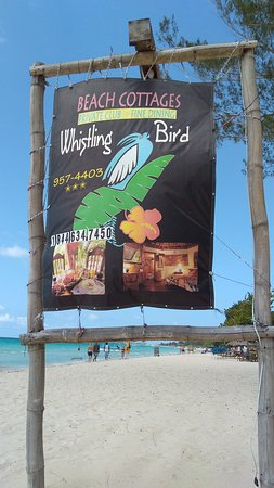 Whistling Bird Resort: IMG_20170220_135512568_large.jpg