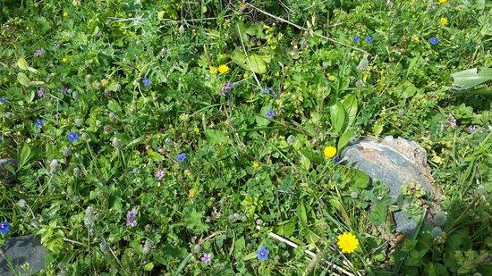 Elounda, اليونان: Все склоны покрыты множеством разных цветов. Не топчите их!