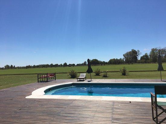 Argentina Polo Day: photo4.jpg