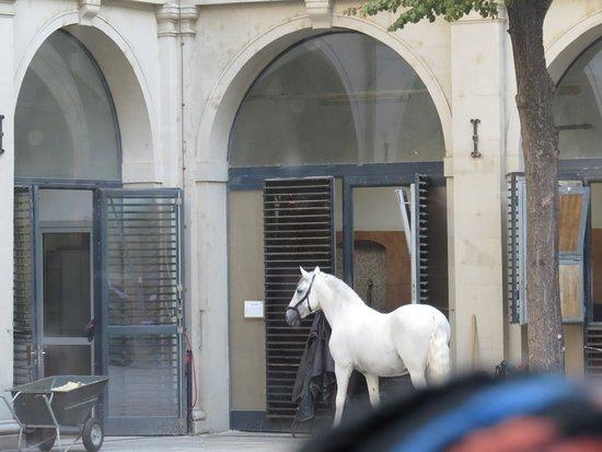 Lignan-De-Bordeaux, Francia: Lipizzaner Stallion