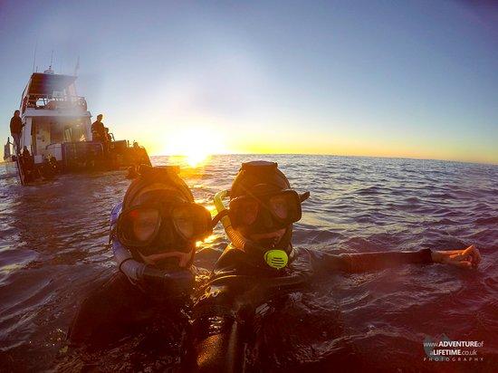 Kaikoura, Nueva Zelanda: Adventure of a Lifetime - Snorkelling with Dolphins at Sunrise