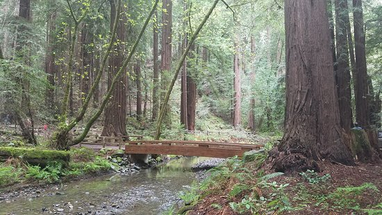 Mill Valley, Kalifornia: Muir Woods National Monument