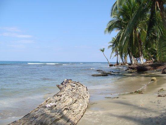 Cocles, Costa Rica: Hotel beach...
