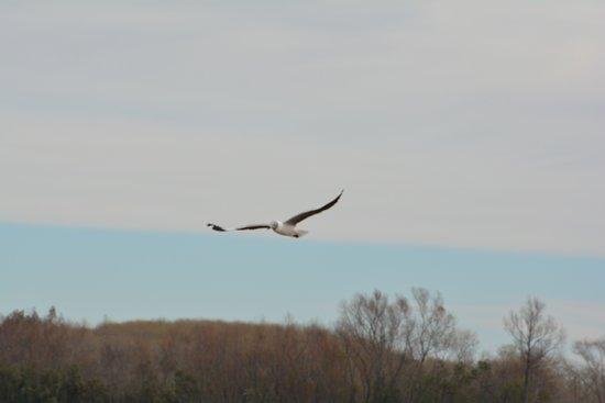 Complejo Zarate Brazo Largo: una de las tantas aves que habitan la zona