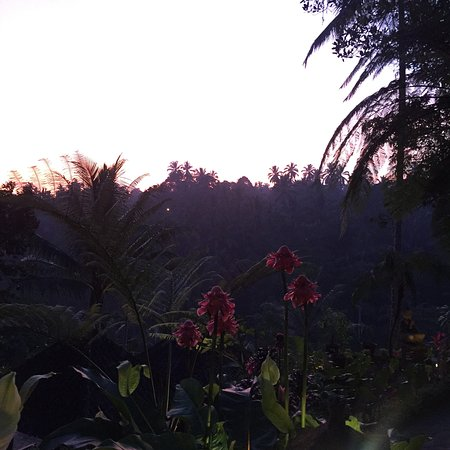 Villa Sarna Ubud Photo