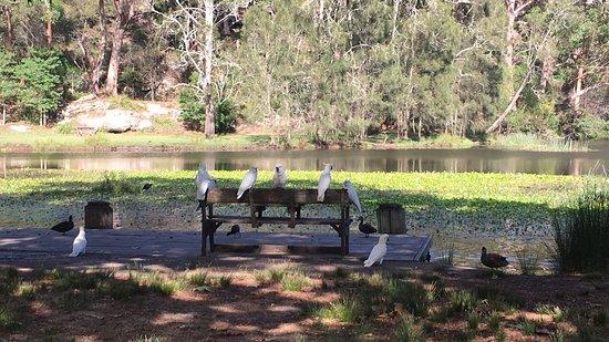 Royal National Park, أستراليا: photo2.jpg