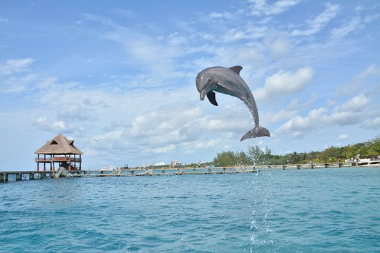 Cozumel Excursions 2019 All You Need To Know Before You