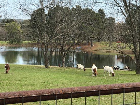 Daingerfield, TX: photo1.jpg