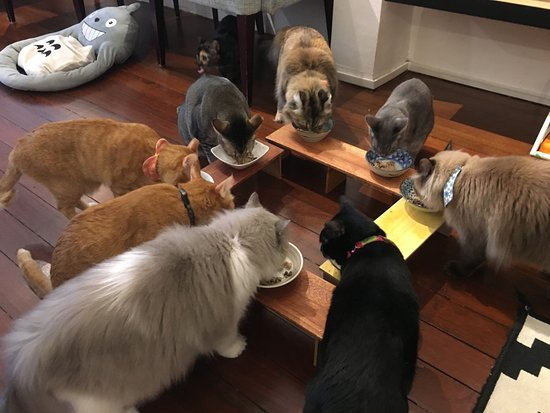 Cats having their lunch - Picture of The Company of Cats ...