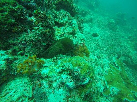 Semporna, Malaysia: morrey eel