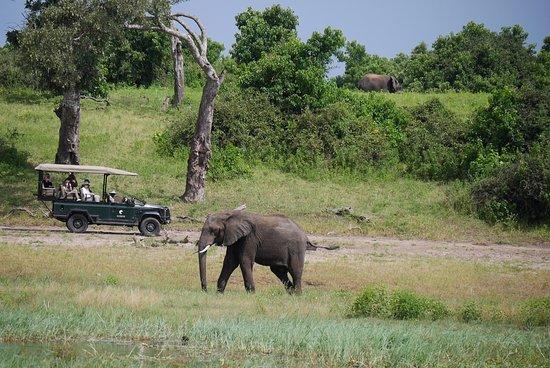 Kasane, Botswana: 水場に出てきたゾウ
