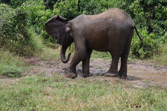 Kasane, Botswana: 水浴びをするゾウ