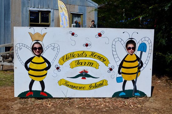 Clifford's Honey Farm: photo0.jpg