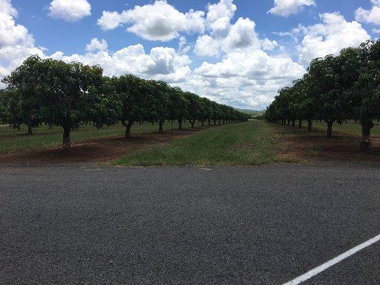 Biboohra, Australie : photo2.jpg