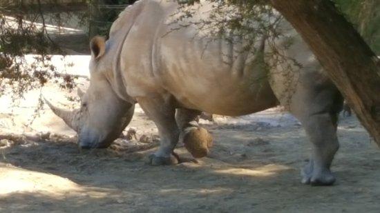Hamilton Zoo: 20170315_113349_large.jpg