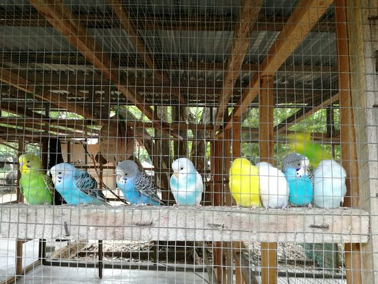 Port Dickson, Malaisie : besides ostrich, birds are shown too