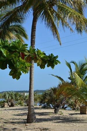 Inhambane, Mosambik: White sand & palms